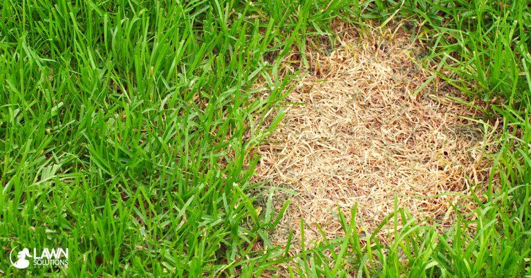 Lawn Dry Spot