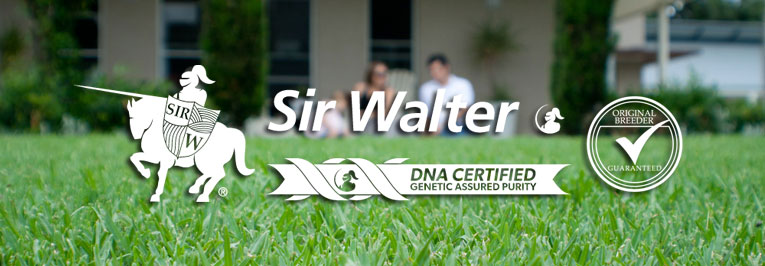 Sir Walter DNA Certified Turf Sydney