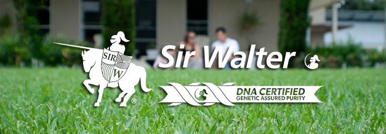 DNA Certified Sir Walter Turf Sydney