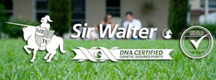 Sir Walter Turf