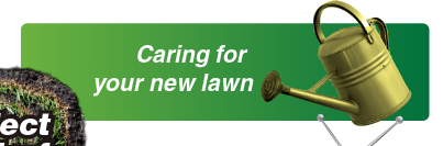 Caring for your new Sir Walter lawn turf